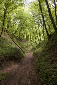 Kazimierski-Park-Krajobrazowy